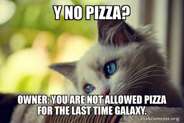 First World Cat Problems meme
