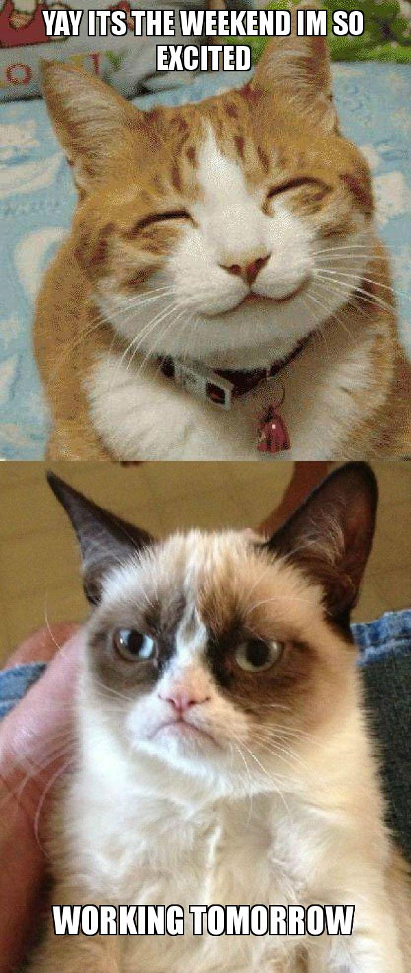 Yay Its The Weekend Im So Excited Working Tomorrow Grumpy Cat Vs Happy Cat Make A Meme This meme originated from an interview with ichiro at safeco field, the home stadium of the seattle mariners that he was belonging to. tomorrow grumpy cat vs happy cat