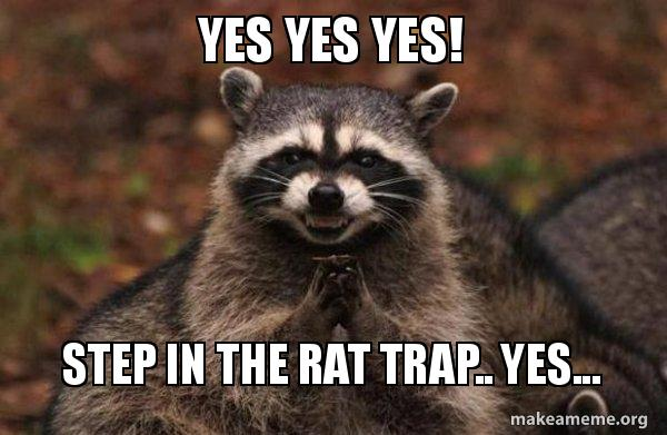 Yes yes YES! Step in the rat trap   yes    - Evil Plotting Raccoon