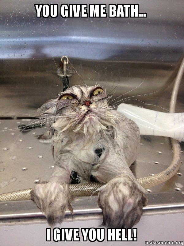 You Give Me Bath I Give You Hell Cat Bath Returns Make A Meme