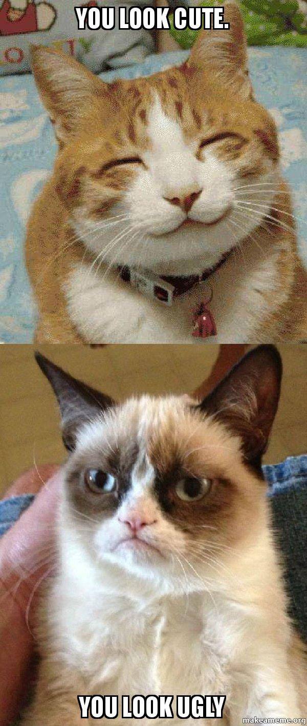 Cute Grumpy Cat Memes